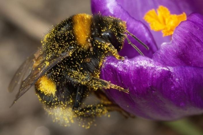 Веганство и насекомые
